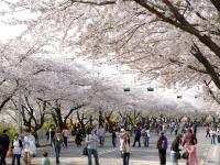Du học Hàn Quốc Hà Nội