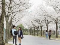 Du học Hàn Quốc miễn phí có thật không?