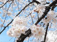 """Đôi điều chia sẻ của bạn Tiến Thành sau khi đọc bài viết: Du học 'Nhật Bản – Vòng quay """"vội vã"""" với cuộc sống bất tận'"""