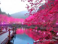 Những ngày lễ trong năm của Hàn Quốc